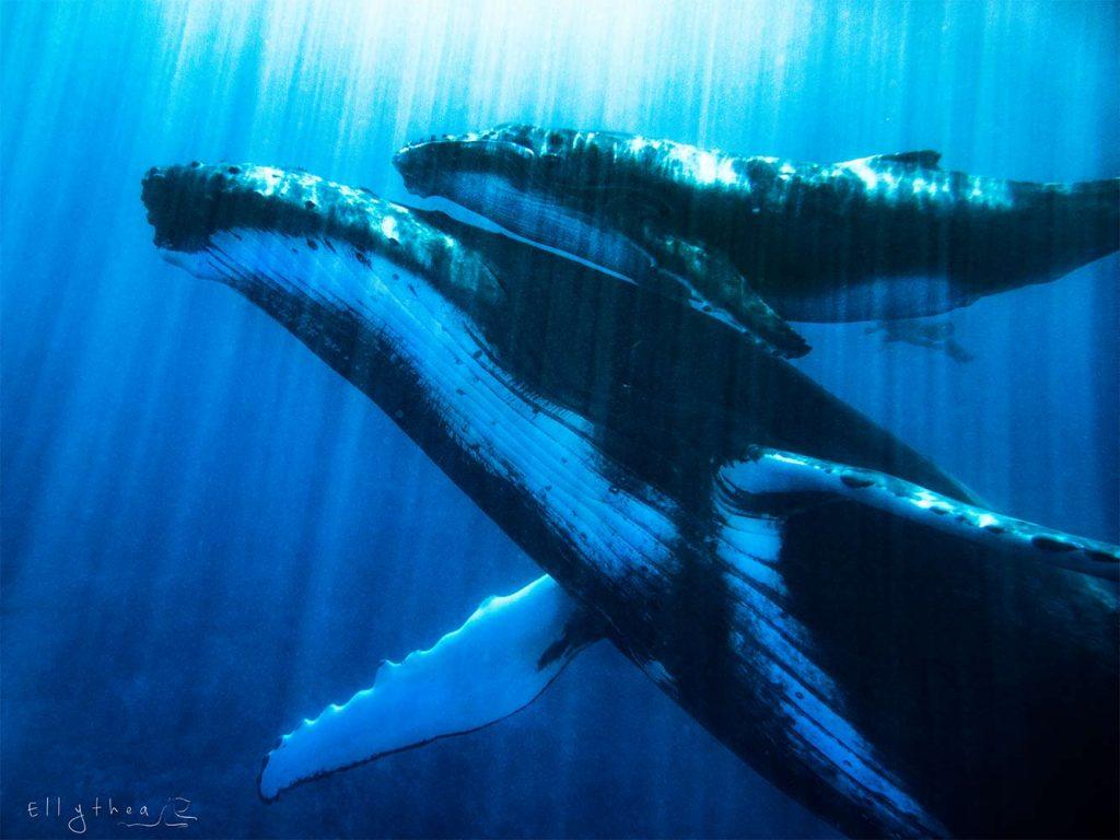 rarlo magazine rarlomagazine whale ellythea