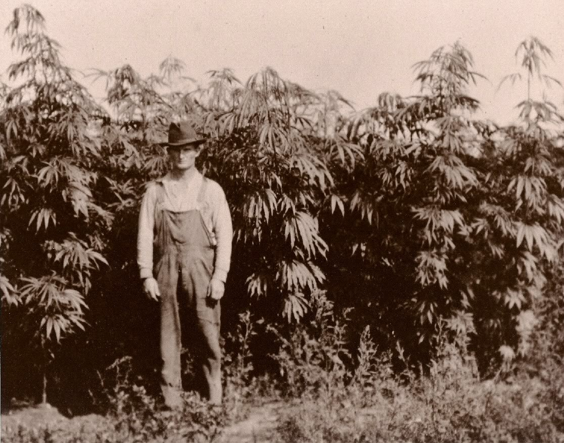 Hemp farm in Seney, Michigan, circa 1920s.
